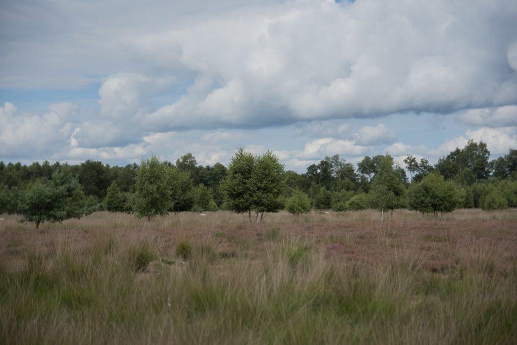 Moor Esterwegen